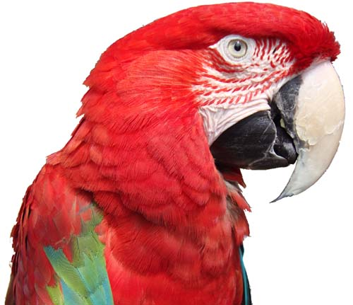 company introduction--parrot,pigeon,sex identification,Sex